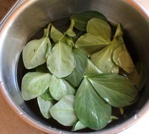 Fava Bean Leaves Soak in Salted Water